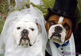 Weddings And Your Pet