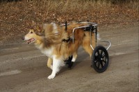 Mobilize Your Disabled Pets