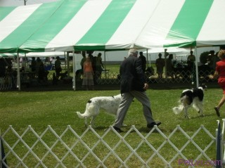 Canfield Dog Show