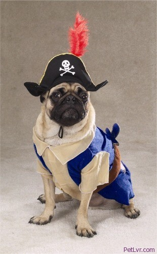 Shiver Me Timber .. Today Is Talk Like A Pirate .. AAaaarRrR