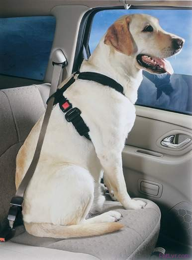 The 2009 Toyota VENZA Offers More Than A Dozen Pet-Friendly Creature Comforts