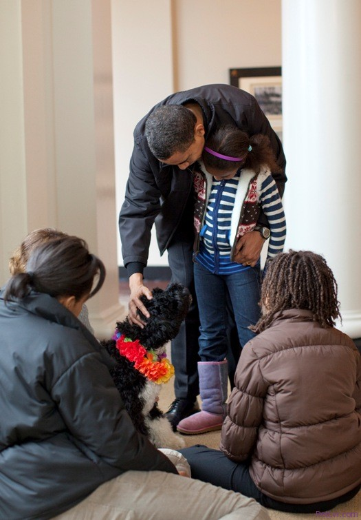 First Dog Bo Obama the Portuguese Water Dog Takes Nation By Storm