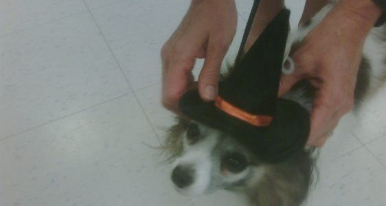 Time Is Running Out – Will You Be Entering The Pet Halloween Costume Contest of 2009?