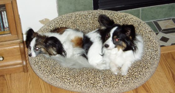 This is Maxxie and Sophie - not part of the Molly Products