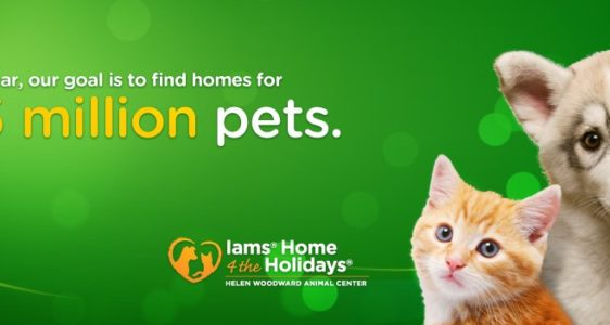 IAMS Home 4 The Holidays 2010 – Let's Adopt 1.5 Million Pets and Donate 5 Million Bowls of Food to Animal Shelters In Need