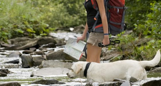 5 Tips To Have a Great Hike with Your Dog