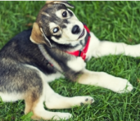 How to Determine if Your Dog is Allergic to Flea Medications