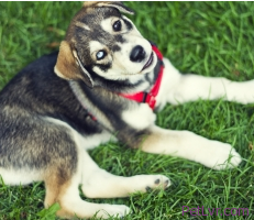 Pets who spend time outside are more prone to getting fleas