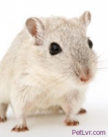 Tips to Find a Lost Hamster, Gerbil or Other Small Pets