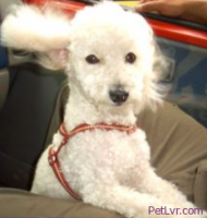Using Sedatives for Pets While Traveling