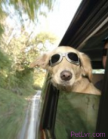 Safety Tips for Traveling With Cats and Dogs