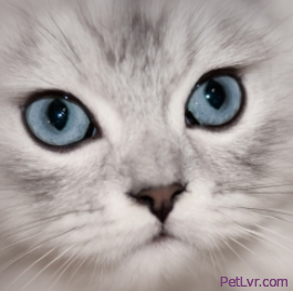 Signs of a Serious Eye Injury or Condition in Your Pet