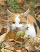 How to Transfer a Feral Cat from a Trap to a Kennel