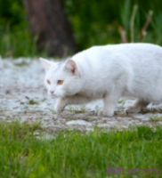 How to Use a Humane Trap to Catch a Feral Cat for Spaying or Neutering
