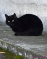 TNR: When to Release a Feral Cat or Stray After Spaying or Neutering