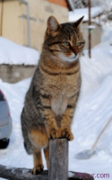 Trap, Spay/Neuter and Release (TNR) for Feral Cats and Strays