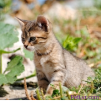 What Happens to Stray Cats?