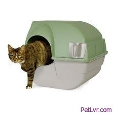 How to Train a Stray Cat to Use the Litter Box