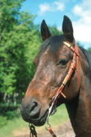 Massage Techniques Designed to Improve a Horse's Mobility and Endurance