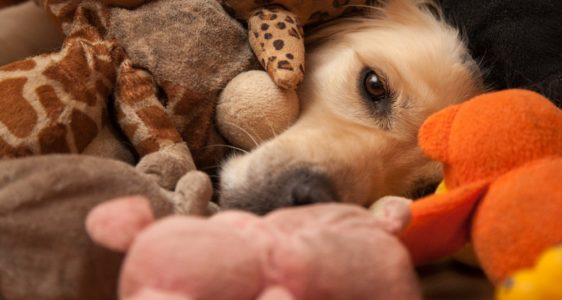 WANT TO SPOIL YOUR PETS EVEN MORE? HERE ARE 3 TIPS HOW TO AFFORD TOYS, SNACKS, AND OTHER ESSENTIALS