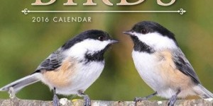 2016 Backyard Birds Small Wall Calendar