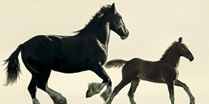 2016 Horse Feathers Wall Calendar