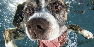 2016 Underwater Dogs Mini Wall Calendar