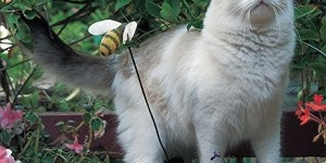 A Cat in the Garden 2016 Calendar