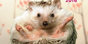Adorable Hedgehogs 2016: 16-Month Calendar September 2015 through December 2016