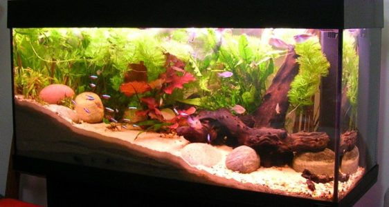 How To Find A Supplier Of Aquarium Products