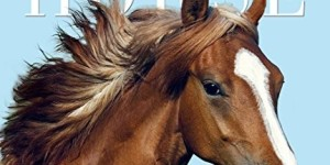 Horse Page-A-Day Gallery Calendar 2016