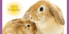 Love Bunnies 2015 Wall Calendar