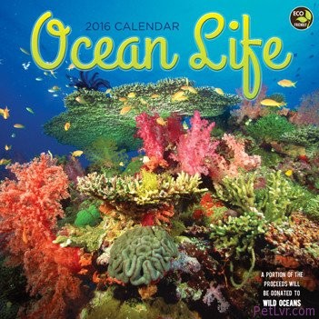 Ocean-Life-Wall-Calendar-by-TF-Publishing-2016-0