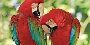 Parrots National Geographic 2016 Wall Calendar