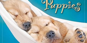 Pooped Puppies 2016 Wall Calendar
