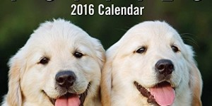 Puppies 2016 Mini Day-to-Day Calendar