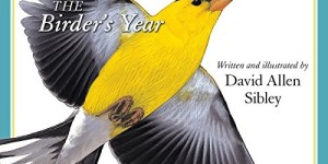 Sibley: The Birder's Year 2016 Wall Calendar
