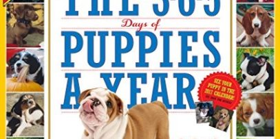 The-365-Puppies-A-Year-Picture-A-Day-Wall-Calendar-2016-0