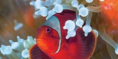 Tropical Fish 2016 Wall Calendar