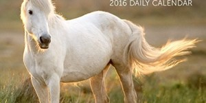 Turner Horses 2016 Photo Daily Boxed (8970009)