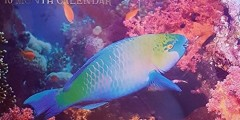 Wall Calendar 2016 Ocean Colors & Exotic Fish 16 Month Calendar