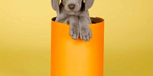 William Wegman Puppies 2016 Wall Calendar