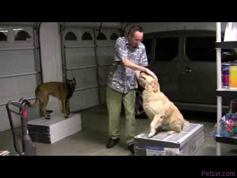 "A Dog Training Tip For Building ""Prey Drive"""