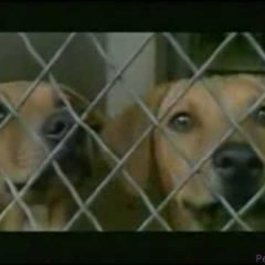 Adopt a Dog Commercial