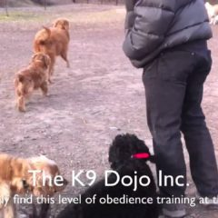 Advanced: Dog training tip of the day 2011 april 16
