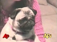 """""""America's Funniest Home Videos"""" Animal Clips"""