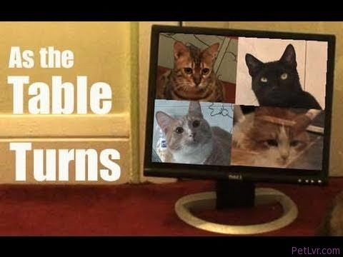 As the Table Turns — Cat Clips #150