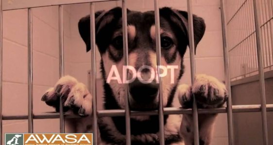 "AWASA Video Contest. ""Save A Life"" Pet Adoption PSA"
