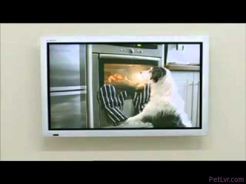 """Awesome """"Adopt Me"""" Dog Commercial!"""