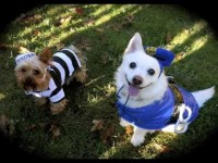 ★Bad Dogs! Funny Dog Video . . . k9 Cops★